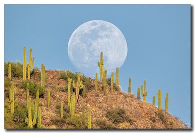 Suguaro Moonrise