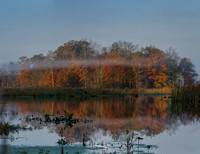 Morning at the Great Swamp